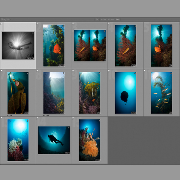5 Easy Steps to Process Your Underwater Photos