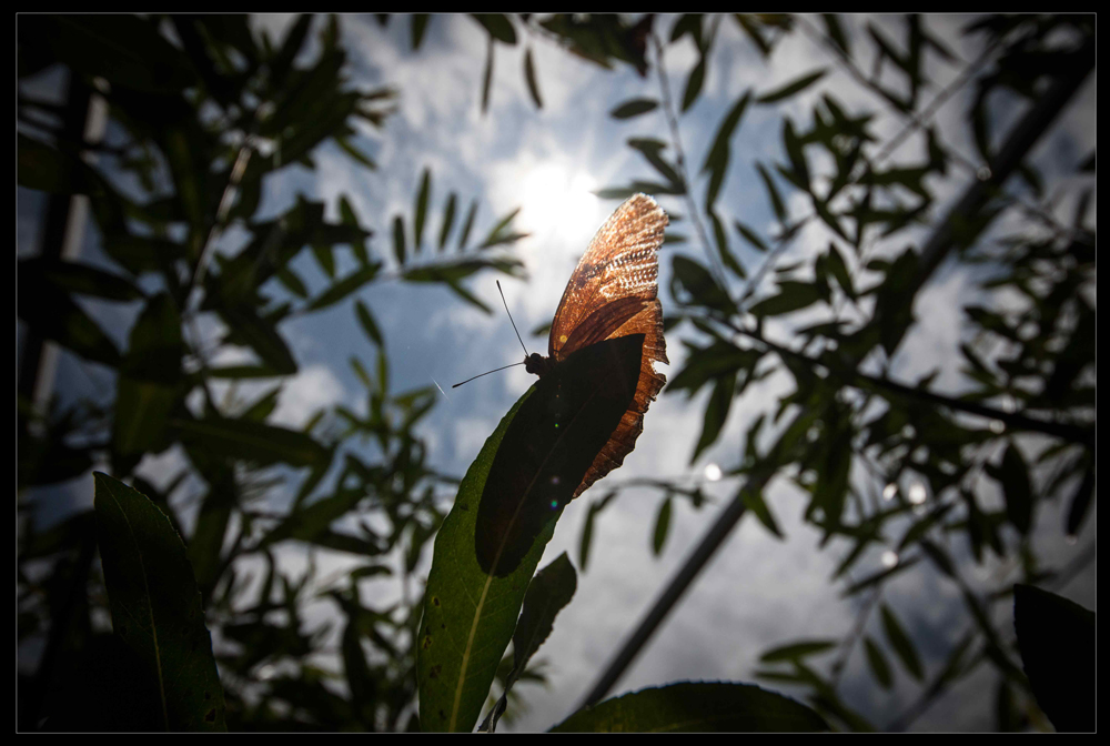 Sigma 12-24mm Lens Review photo by Thann Clark