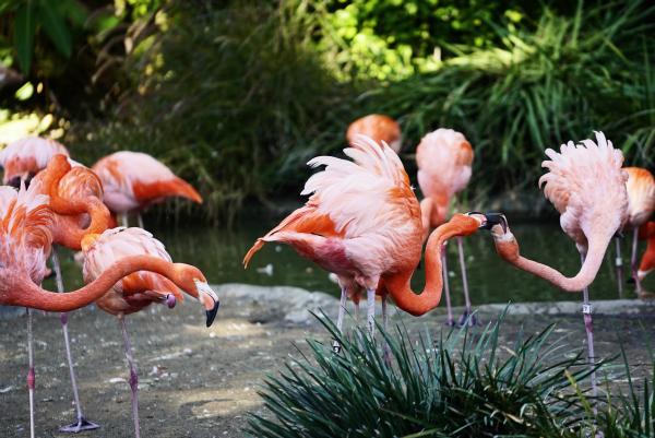San Diego Zoo Sony A7rII