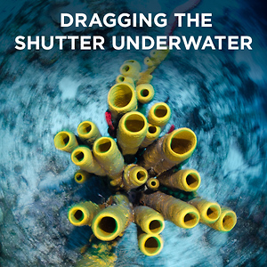 Dragging the Shutter Underwater by Michael Zeigler