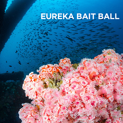 Eureka Bait Ball by Todd Winner