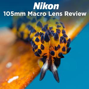 Nikon 105mm f/2.8 Macro Lens Review by Michael Zeigler