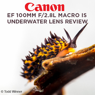Canon EF 100mm f/2.8L Macro IS Underwater Lens Review by Todd Winner
