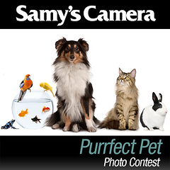 Purrfect Pet Photo Contest: September 2013