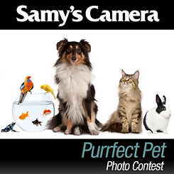 Purrfect Pet Photo Contest