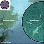 B+W 58mm Circular Polarizer Multi-Resistant Coated (MRC) Filter
