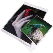 Print File BOPP811 - 8.5 x 11 (Package of 100) 8-3/4 x 11-1/4 bag