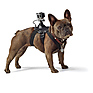 Fetch (Dog Harness) Thumbnail 4